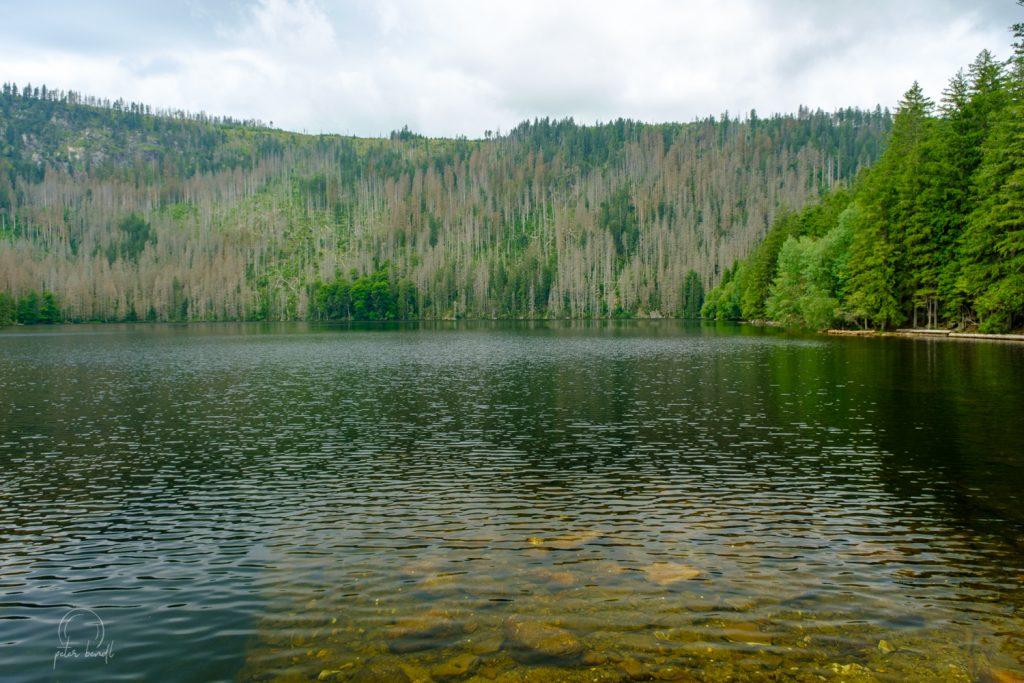 Šumava / Čierne jazero / Česká republika